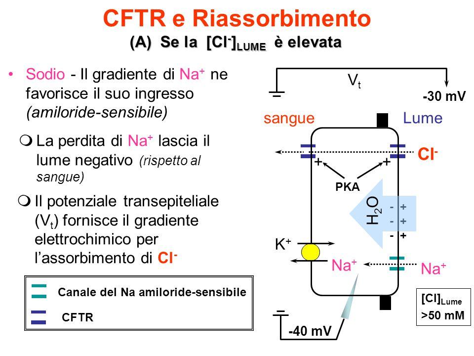 CFTR e Riassorbimento Cl- (A) Se la [Cl-]LUME è elevata